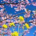 E' arrivata la primavera: ecco cosa ci porta