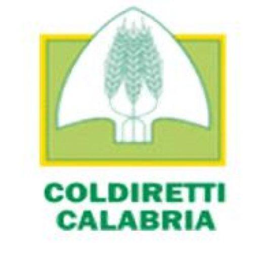 Coldiretti, Aceto: dimezzata la produzione di olio calabrese, domanimartedì 8 gennaio anche agricoltori calabresi in piazza a Roma