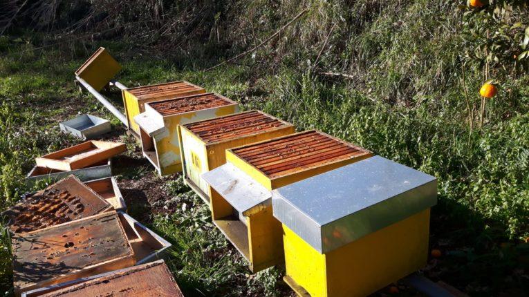 Coldiretti: terzo atto vandalico in un anno nell'azienda apistica di Pagnotta Josephine di Feroleto Antico, distrutte tutte le arnie dell'allevamento