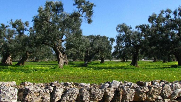 Puglia regione virtuosa in tema di sostenibilità ambientale, se ne è parlato alla Fiera del levante