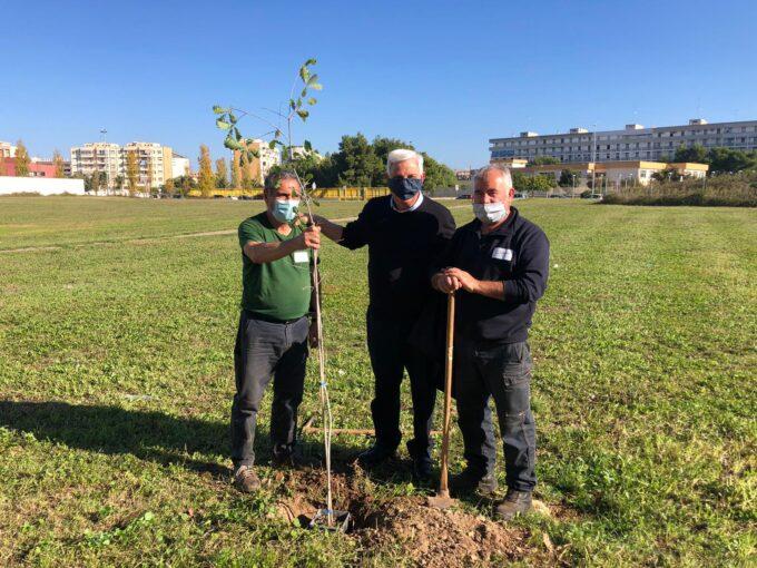 """Lecce: """"Giornata dell'albero"""", in città saranno piantati  100 nuovi alberi"""