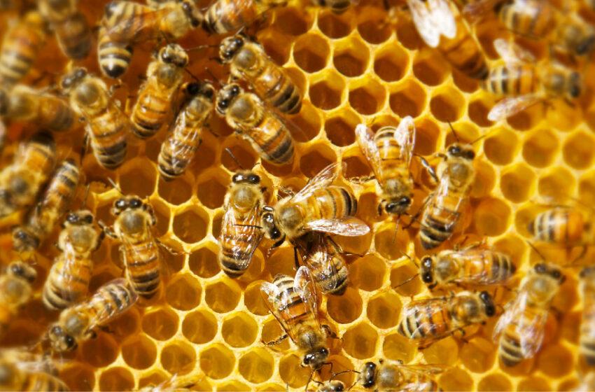 Coldiretti: s.o.s. apicoltura, le api rischiano di non volare