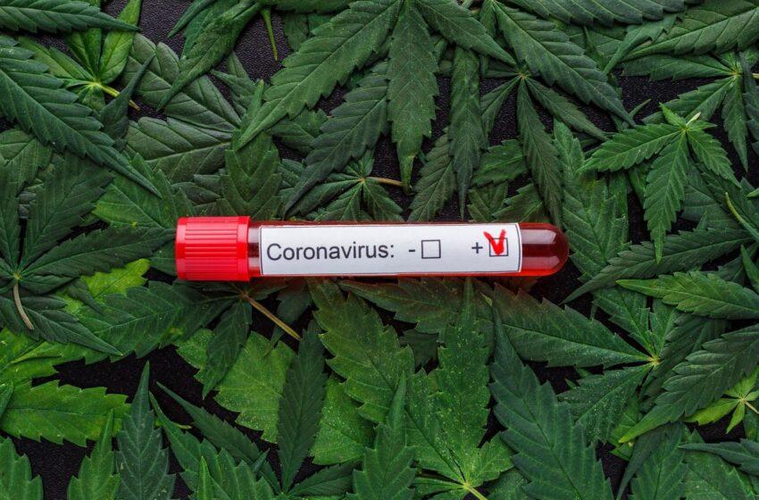 USA, Stato di Washington: marijuana gratis per chi si vaccina  contro il covid