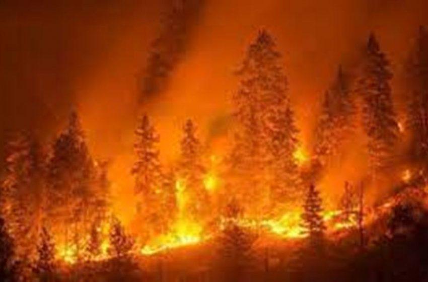 Bruciano i boschi, la terra si consuma, l'aria soffoca, l'amore si spegne. Anche in Calabria la salvezza c'è ancora